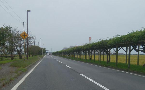 新田清掃センターへの並木道