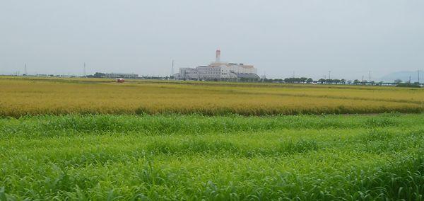 田んぼ越しに遠くに見える新田清掃センター