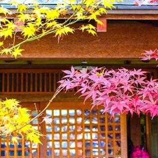 庵の前に赤と黄色のもみじがきれいな小さい画像