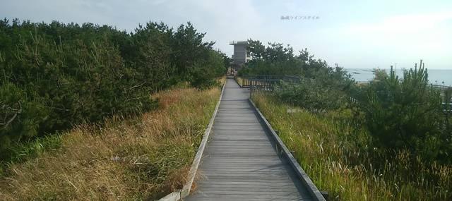 海浜植物園の遊歩道その3