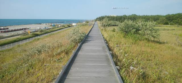 海浜植物園の遊歩道その4