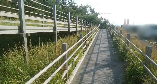 海浜植物園に入る板橋