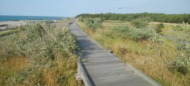 海浜植物園の遊歩道その1
