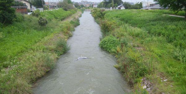 「しんにしかわばし」から西川を新潟方面に向いて眺めた図