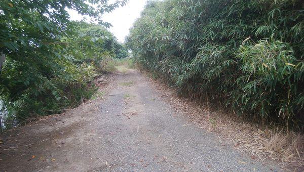 林道から左を見た図