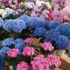 道の駅花夢里にいつの色鮮やかな花たち