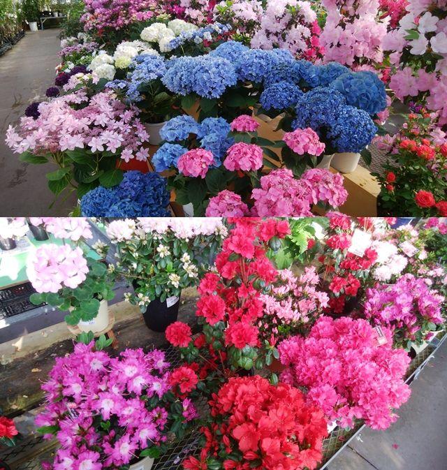 道の駅花夢里にいつの色鮮やかに咲いた色んな花の数々