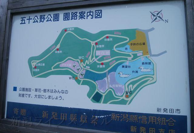 五十公野公園あやめ園の園路案内図