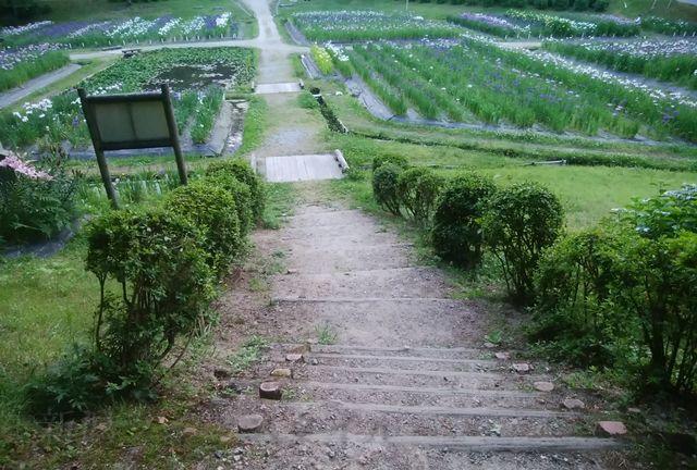 五十公野公園あやめ園の側道からあやめ園に下りる階段
