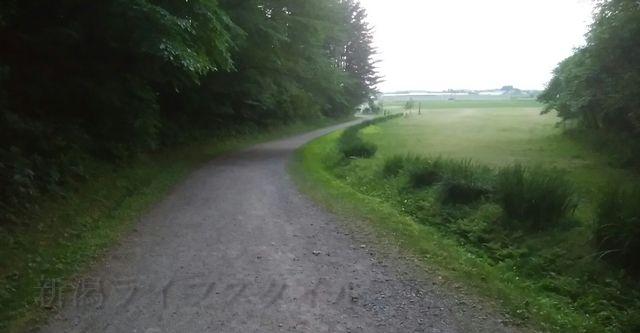 五十公野公園あやめ園の戻り道の最後の平坦な道