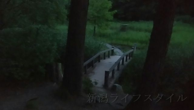 五十公野公園あやめ園の五十公野公森林館横の小道
