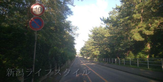 関屋浜の近くの道路。木々に覆われて視界が悪い