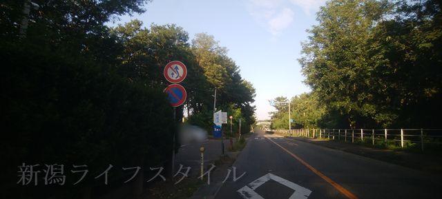 関屋浜の近くの道路。突然森が切れて通路がある