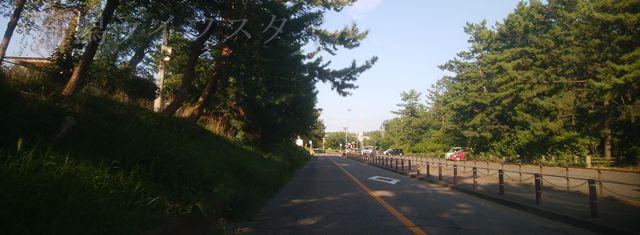関屋浜の近くの道路。左は森林が続くき、右側は大駐車場。