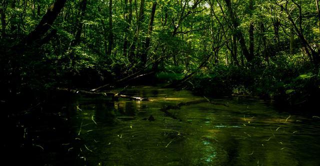 蛍の光が舞う森林に囲まれた小川