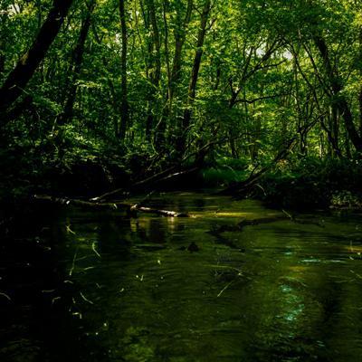 木々が光のほとんどを遮る小川に蛍が舞う