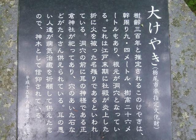 羽黒神社の大けやきの説明の石碑