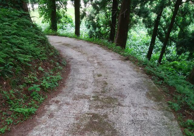 羽黒神社の社殿を出て一本だけある道