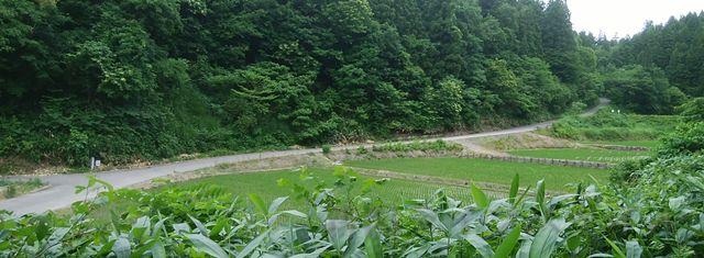 羽黒神社を下山し終える辺りで見えてくるもう一本の道