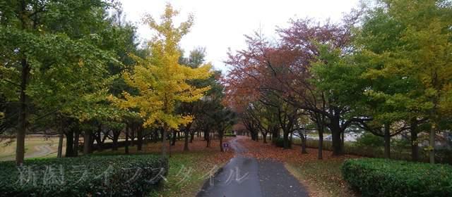 上堰潟公園の紅葉風景その2