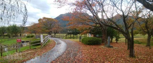 上堰潟公園の紅葉風景その5
