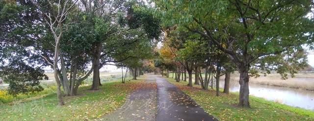 上堰潟公園の紅葉風景その6