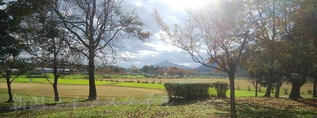 上堰潟公園の紅葉風景その7