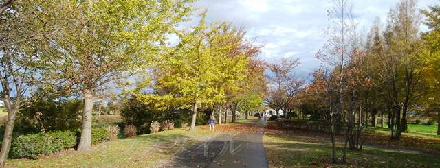 上堰潟公園の紅葉風景その8