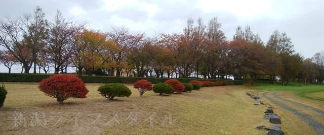 上堰潟公園の紅葉風景その1