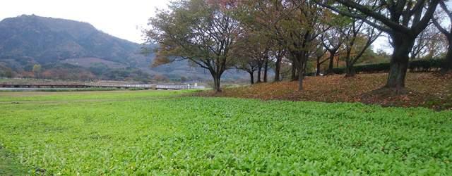 上堰潟公園の紅葉風景その3