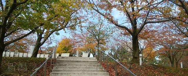 白山公園の階段したから見上げる紅葉
