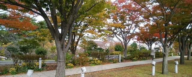 白山公園空中庭園の遊歩道脇から眺めた紅葉