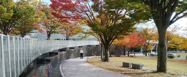 りゅーとぴあと県民会館の間の紅葉