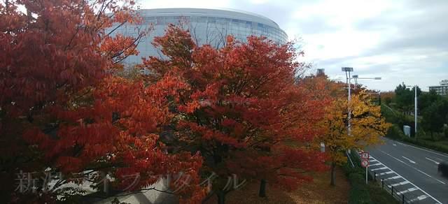 遊歩道側から見た紅葉とりゅーとぴあの重なり