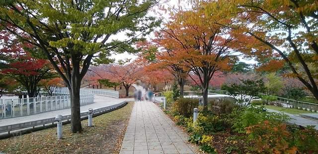 県民会館前の細い遊歩道の風景