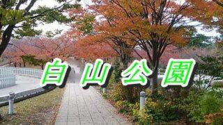 白山公園空中庭園の坂道遊歩道周りの紅葉
