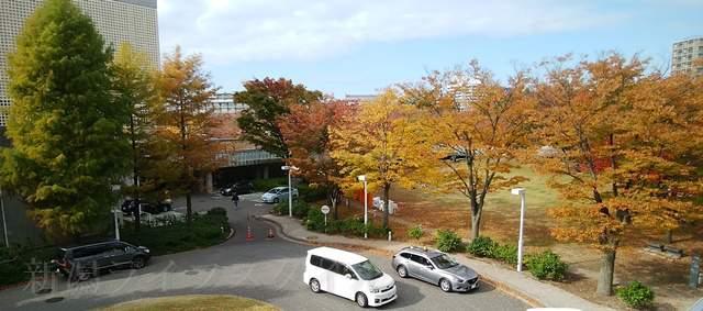 白山公園空中庭園から駐車場B方向の紅葉