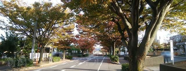 西大畑公園前の通り。街路樹が紅葉してキレイ