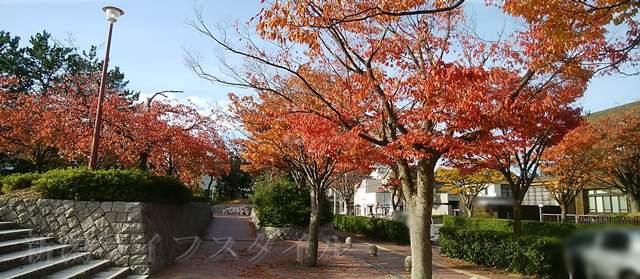 西大畑公園の入口右側の真っ赤に紅葉した木を横から見る。