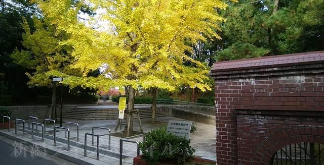 西大畑公園の裏側入口の黄色く紅葉した大きな木