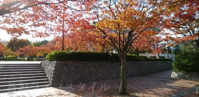 西大畑公園の正面入り口右側の木々
