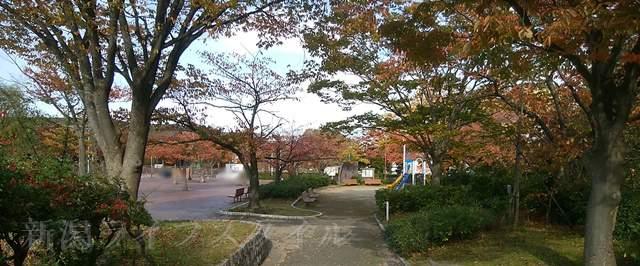 西大畑公園の紅葉する遊歩道