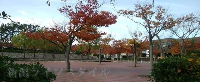 西大畑公園の中央広場の紅葉した木々たち