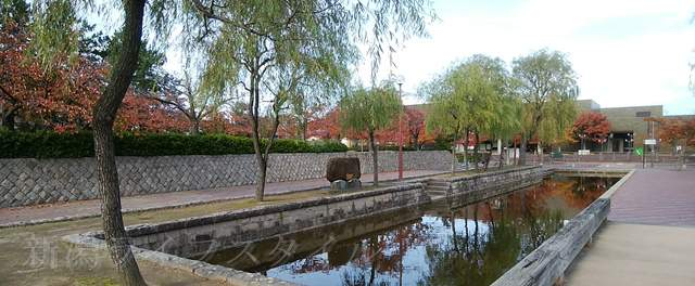西大畑公園のお堀と柳