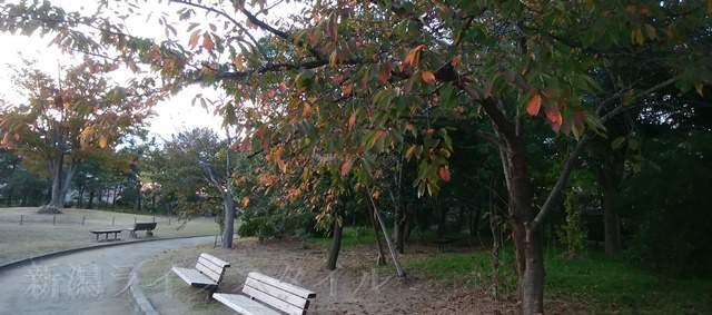 鳥屋野中央公園(鏑木エリア)の広場とウォーキングコースとベンチ