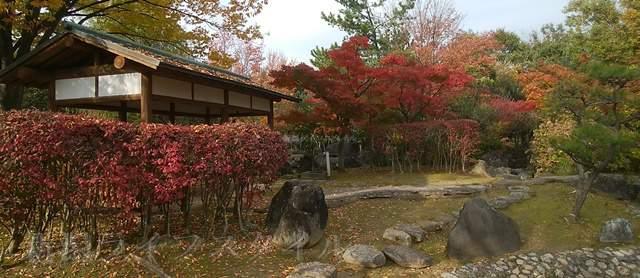 濁川公園の日本庭園の紅葉その3