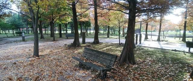 濁川公園の憩いの森の風景
