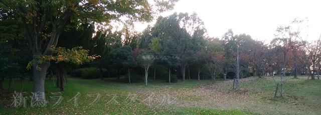 舞平公園の紅葉した木々その5