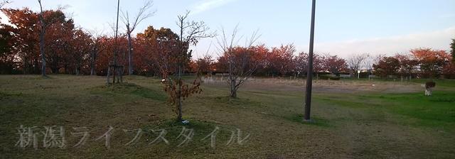 舞平公園の紅葉した木々その1