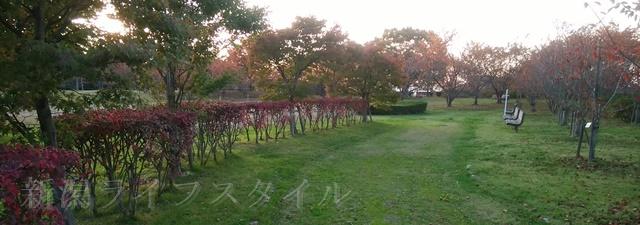 舞平公園の紅葉した木々その2